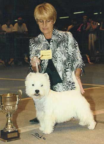Les West Highland White Terrier de l'affixe Du domaine de montrose