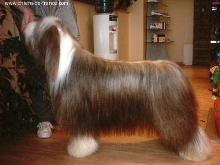 Les Bearded Collie de l'affixe Victory wind's