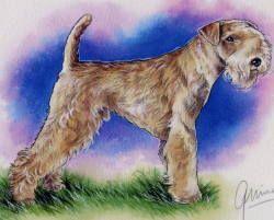 Le Standard de la race Lakeland Terrier sur Atara.com