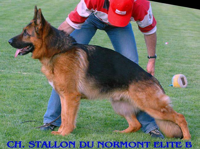 CH. Stallon Du normont