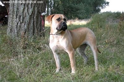 Doggy Dog Tzigane
