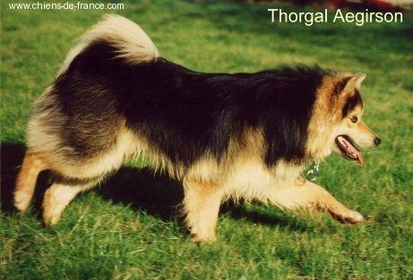 Thorgal Aegirsson