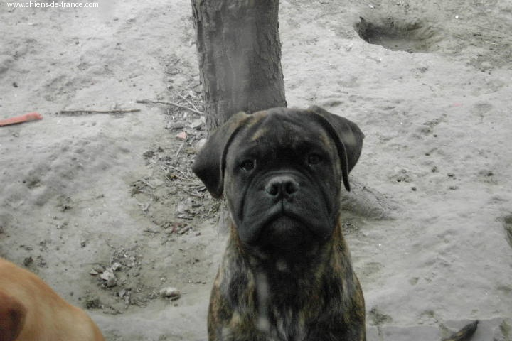 Doggy Dog Venga
