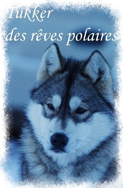 Les Siberian Husky de l'affixe des rèves polaires