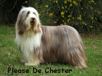 Les Bearded Collie de l'affixe Of still river