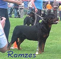 Rottweiler - CH. Ramzes Crni lotos