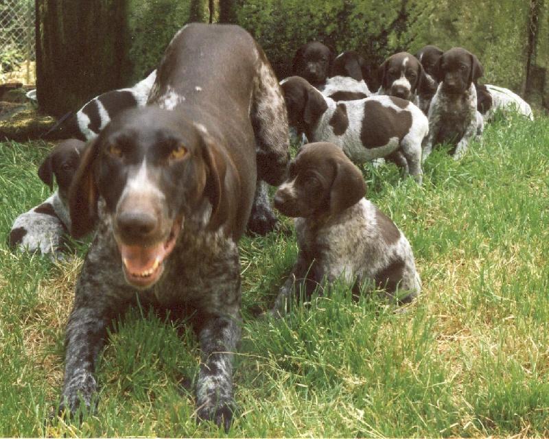 Accueil - Elevage Vom hundegelaut - eleveur de chiens