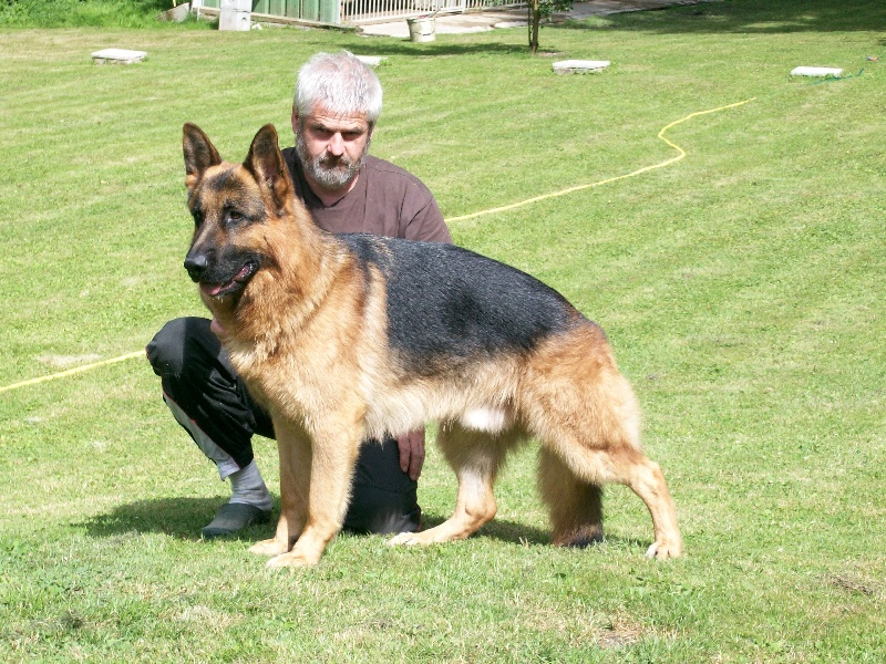 Accueil - Elevage des terres de Sax - eleveur de chiens