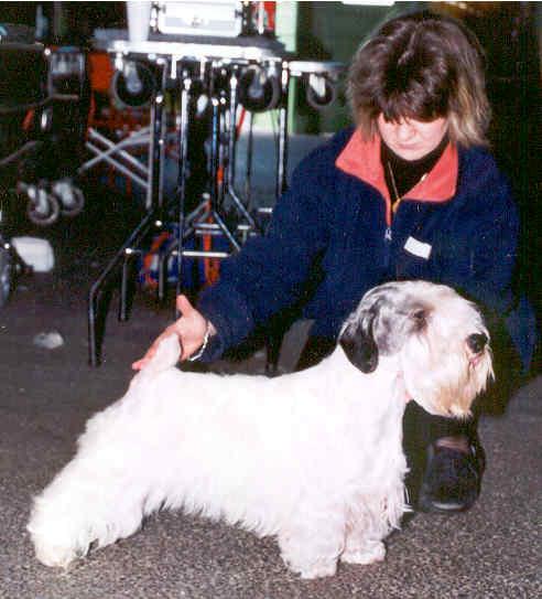 Le Standard de la race Sealyham Terrier sur Atara.com