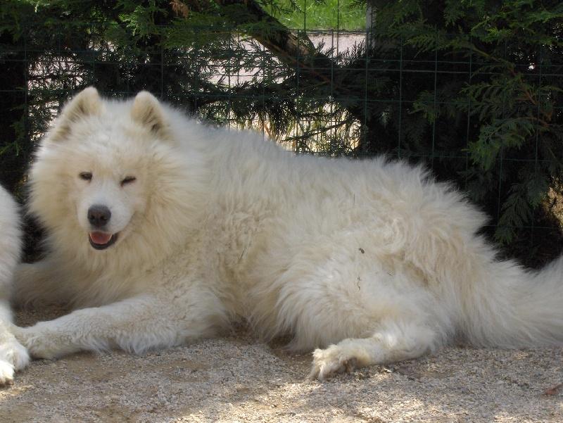 Site rencontre proprietaire chien