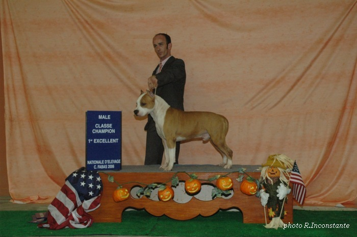 American Staffordshire Terrier - CH. bakaroro end ituberi Fawn