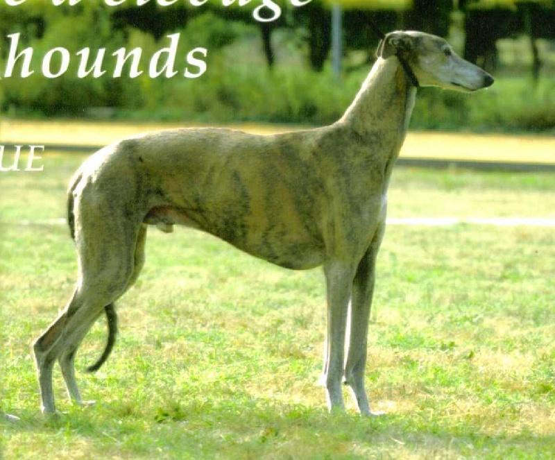 Les Greyhound de l'affixe des Enfants de Pénéole