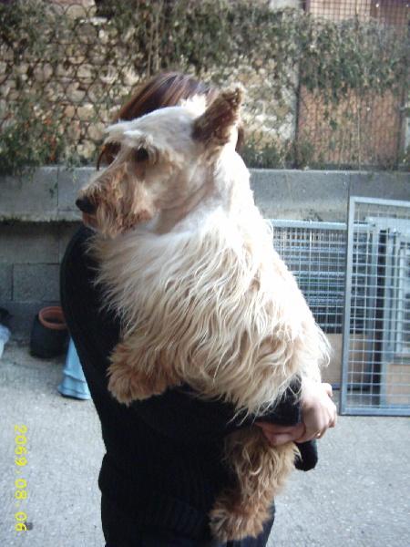 Les Scottish Terrier de l'affixe du domaine des quatre Pierres