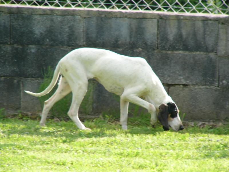 Accueil - Elevage Du pays des gaves - eleveur de chiens