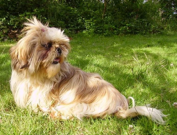 Rudy sweet romance chien de race toutes races en tous