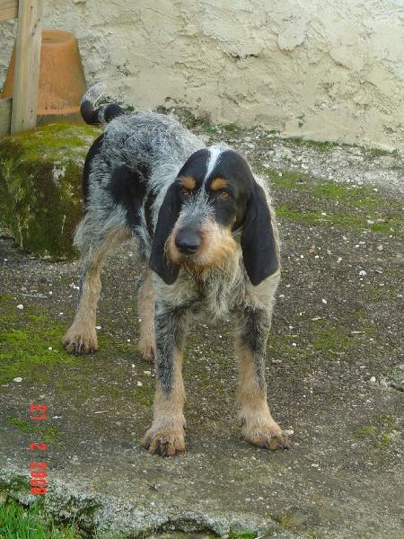 Atos des coteaux puylaurentais chien de race toutes races - France bleu gascogne grille des programmes ...