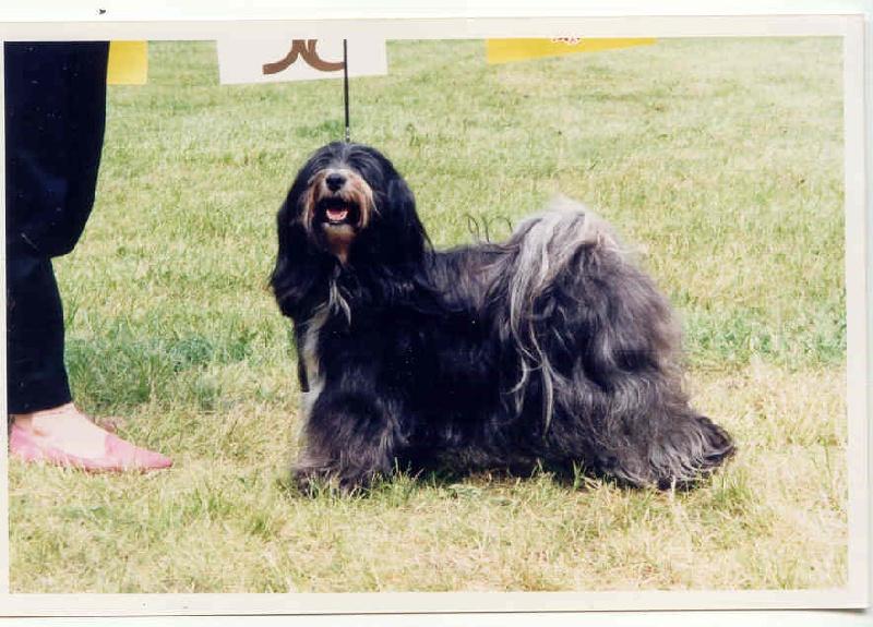 Les Terrier tibetain de l'affixe Du clan de lis