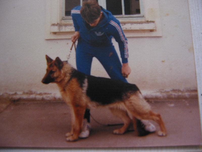 Les Dogue allemand de l'affixe Des Hobereaux De La Zorn