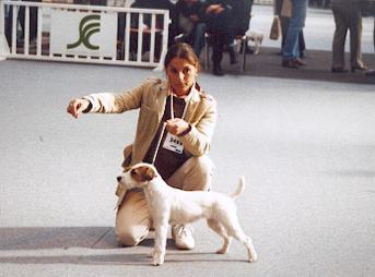 Les Parson Russell Terrier de l'affixe De ghundaï