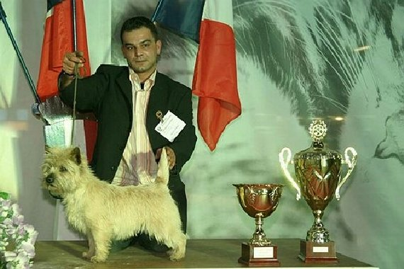 Les Cairn Terrier de l'affixe du Harpouy D'Auzan
