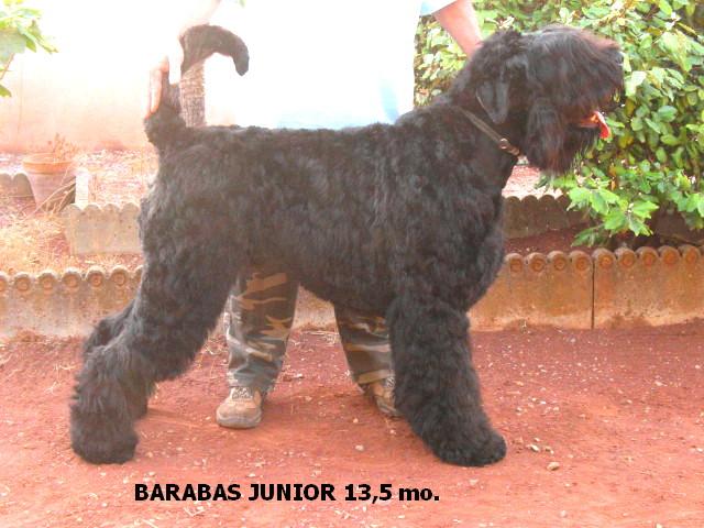 Pipe Major Barabas  junior