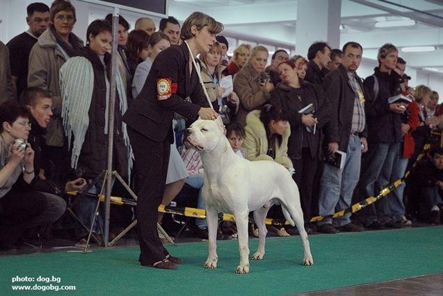 Les Dogo Argentino de l'affixe Cazador del Pampa