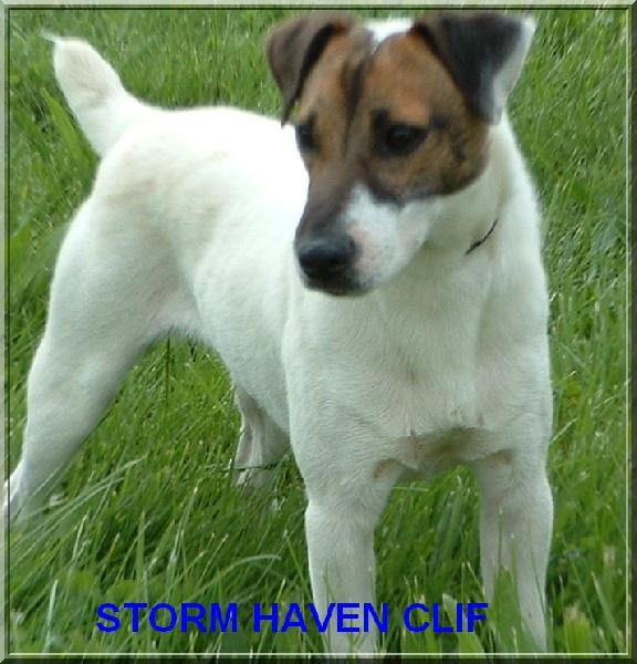 Les Jack Russell Terrier de l'affixe des Chaumes D'Ambon