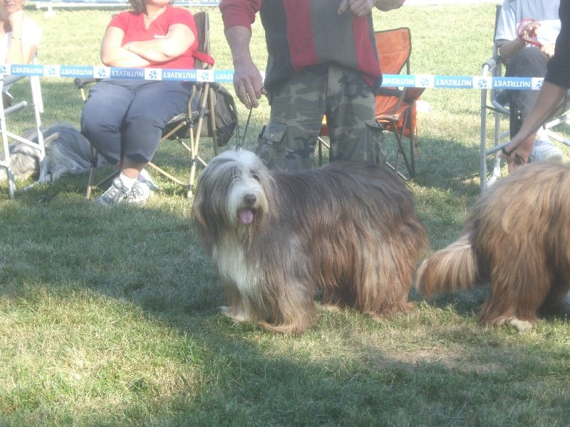 Les Bearded Collie de l'affixe de l'Ousse Vallee