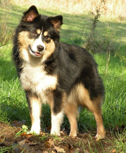lapinlumon willatukko chien de race toutes races en tous departements france inscrit sur chiens. Black Bedroom Furniture Sets. Home Design Ideas