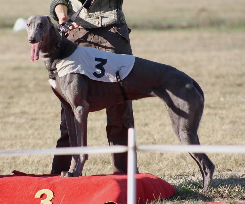 Les Greyhound de l'affixe A La Cour du Roi Boulou