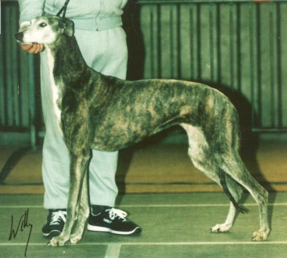 Les Greyhound de l'affixe des Légendes du Moyen-Age