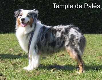 Babka du temple de Palés