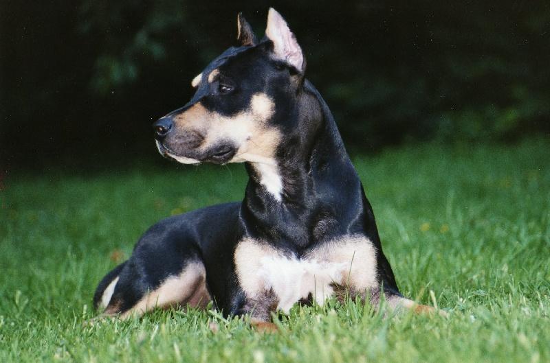 Rahzel du petit bois tranquille chien de race toutes races