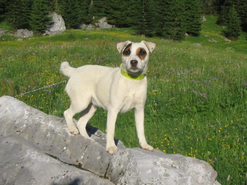 Les Jack Russell Terrier de l'affixe de la cascade d'Orlier