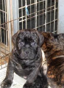 Doggy Dog Caruso