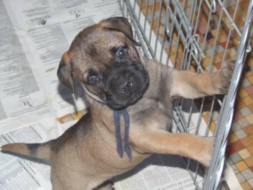 Doggy Dog Elka