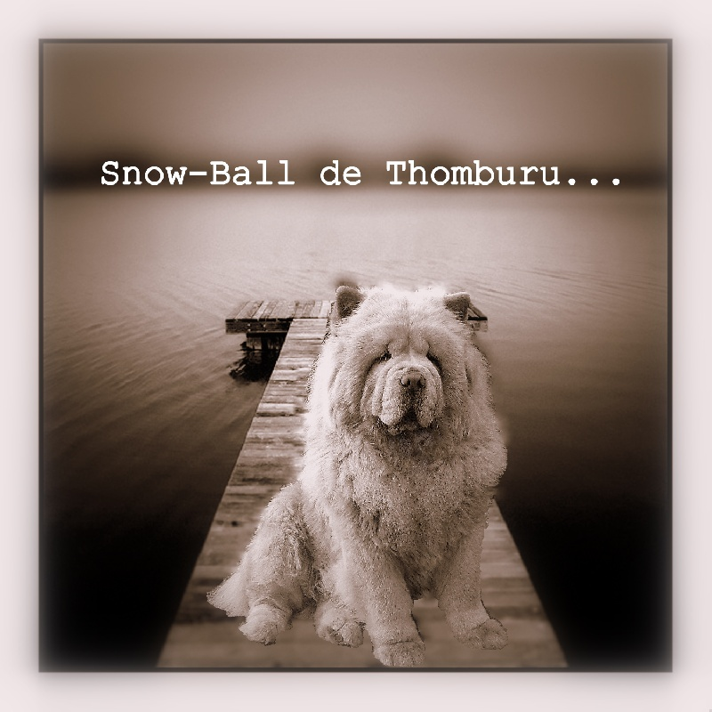 Snow-ball de thomburu