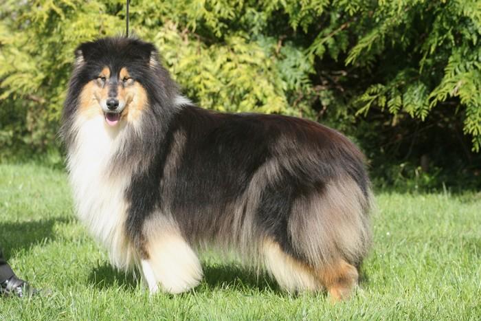 be da black de cathyja chien de race toutes races en tous departements france inscrit sur chiens. Black Bedroom Furniture Sets. Home Design Ideas