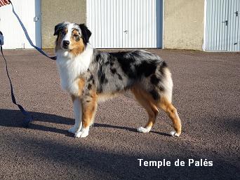 Django du temple de Palés