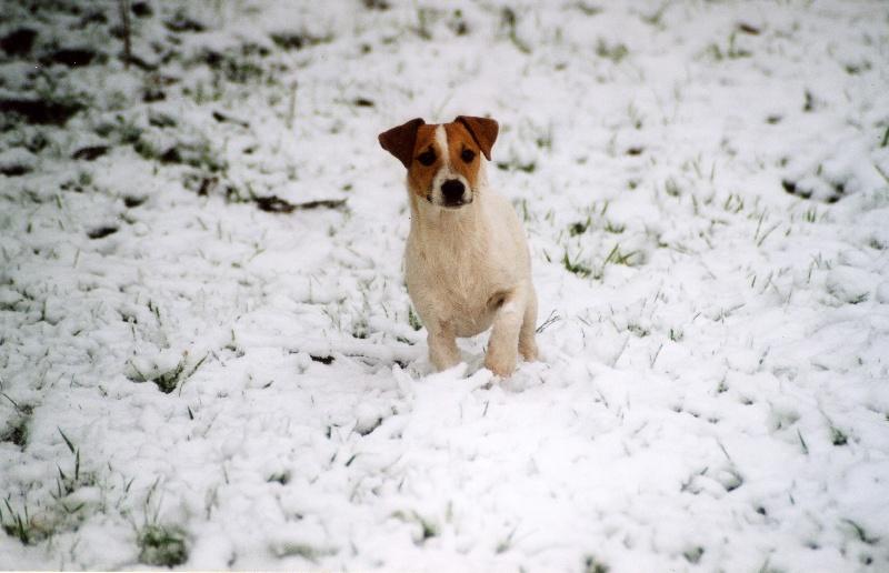 Les Jack Russell Terrier de l'affixe de la pinkinerie
