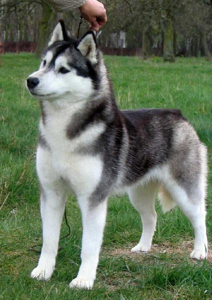 Chien - Elevage Des Jardins De Lexy - eleveur de chiens