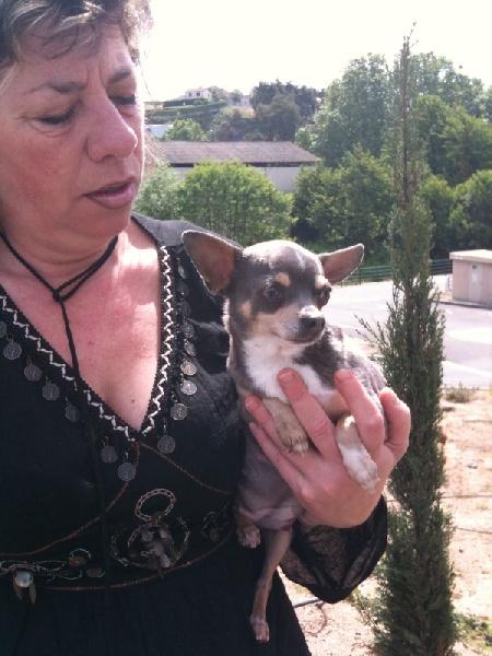 Les Chihuahua de l'affixe du Val de l'Empereur