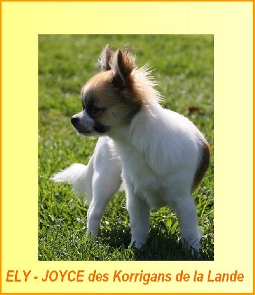 Les Chihuahua de l'affixe Du Domaine De La Sarronnaise