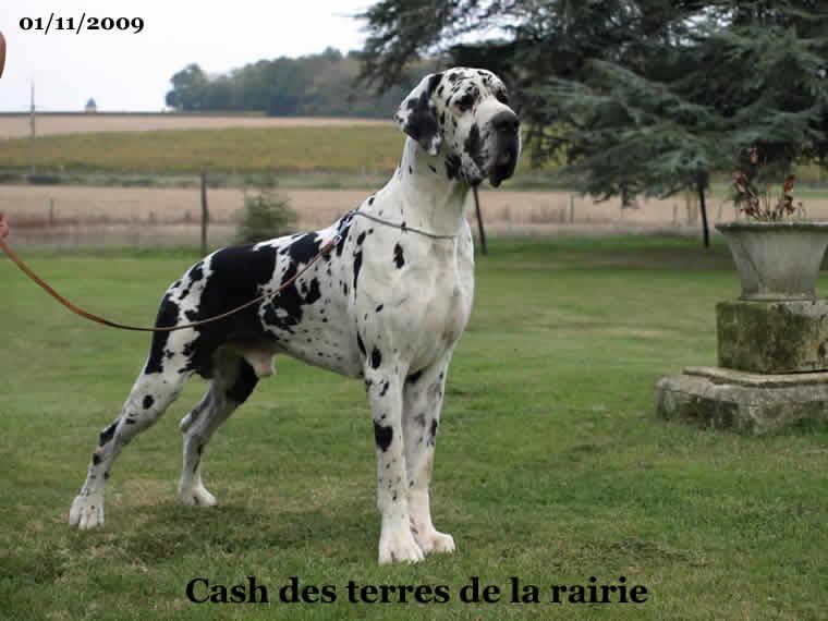 Cash Des terres de la Rairie