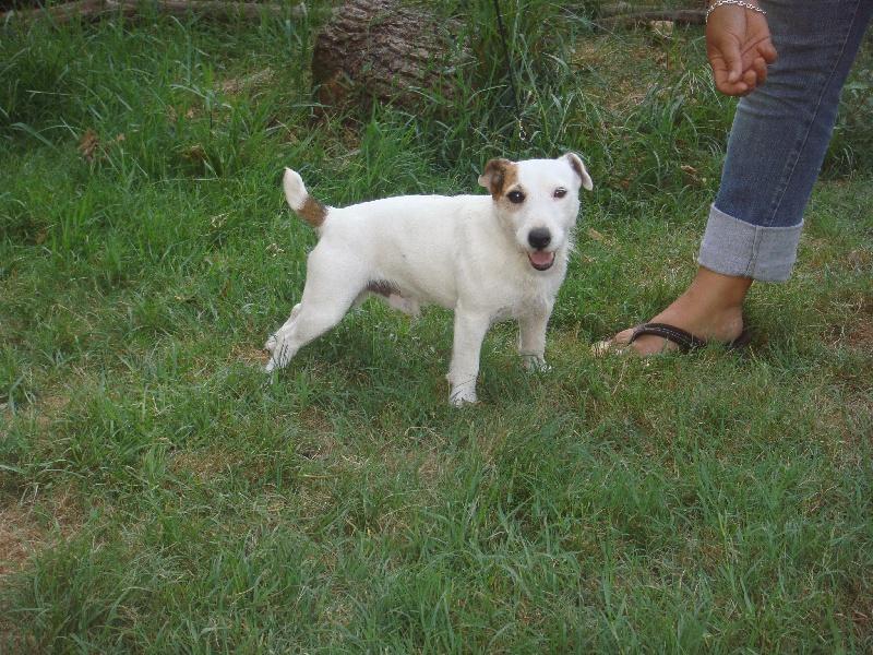 Les Jack Russell Terrier de l'affixe Des Terriers Du Marsan