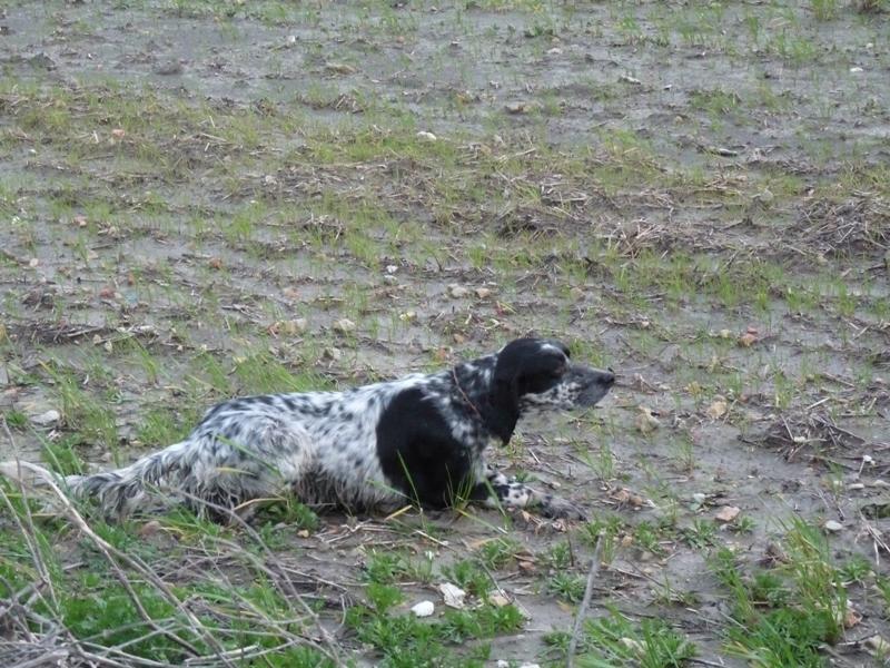 Biscia nera des pesetes chien de race toutes races en tous for Biscia nera