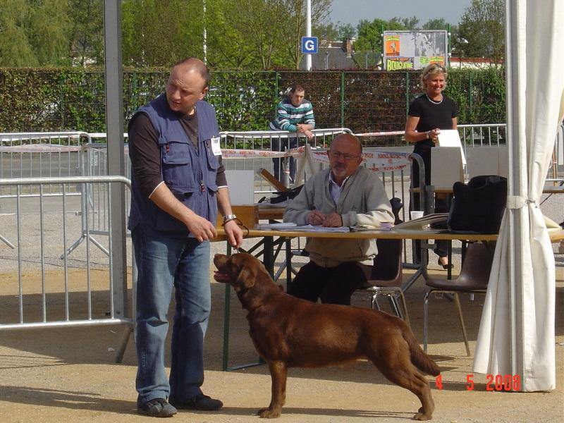 Les Labrador Retriever de l'affixe Du Marais De Piremont