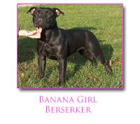 Les Staffordshire Bull Terrier de l'affixe du Domaine d'Ishtar