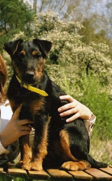 CH. Erkul de la horde des matondus chien de race toutes