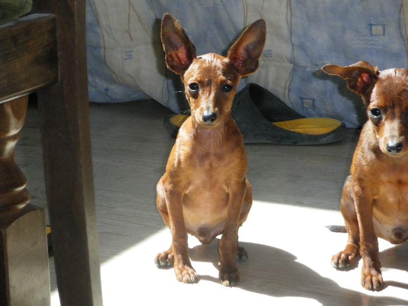 Chien - Elevage du domaine de Tarmac - eleveur de chiens